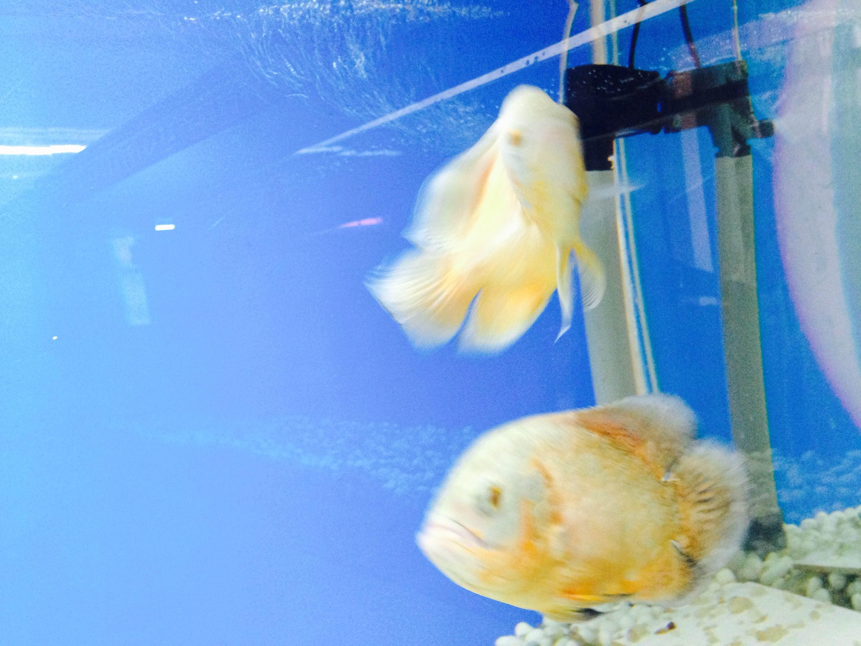 Fish aquarium in ecr - More Carps The Oscars