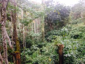 The rainforest like view from the homestay