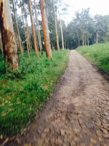Muthanga forest