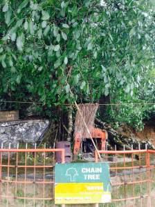 Muneeswaran koil under the chain tree
