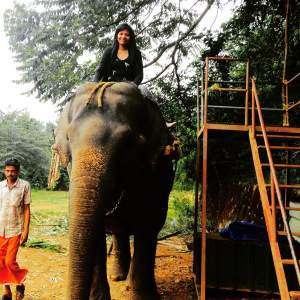 Lakshmi the elephant