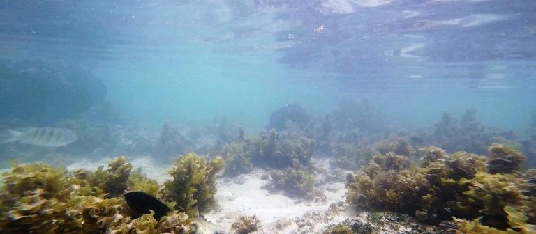 source d argent underwater2