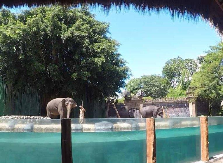 elephant show 1