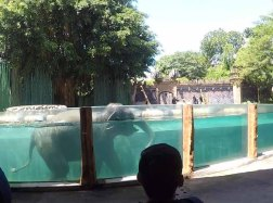 elephant show 2