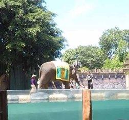 elephant show 4