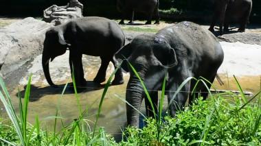 tram elephant