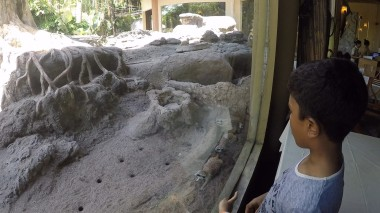 tsavo meerkat closer